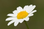 Τα Λουλούδια του Γράμμου